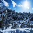 Snowy forest in mountains — ストック写真