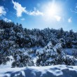 Snowy forest in mountains - Stock Photo