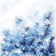 Snowy fir tree background — Stock Photo