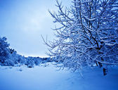 Wintertime landscape — Stock Photo