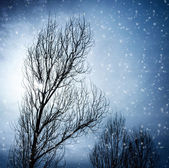 Aged tree in winter — Stock Photo