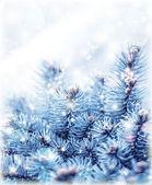 Snowy fir tree background — Stock Photo