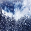 Winter forest border — Stock Photo
