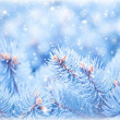 Fir tree background - Stock Photo