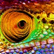 Reptilian eye - Stock Photo