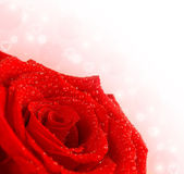 Red rose border — Stock Photo