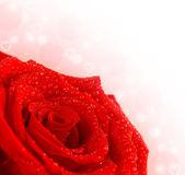 Red rose border — Stock Photo