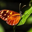 Beautiful butterfly — Stock Photo #20591611