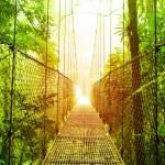 suspensão Arenal pontes parque da costa rica — Foto Stock