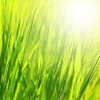 Fresh green grass background — Stock Photo #20592707