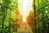 Arenal hängande broar park i costa rica — Stockfoto