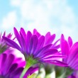 Purple flowers over blue sky - Lizenzfreies Foto