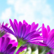 Purple flowers over blue sky - Foto Stock