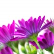 Beautiful purple flowers — Stock Photo