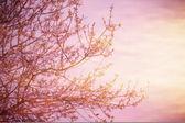 郁郁葱葱的树木在日落 — 图库照片
