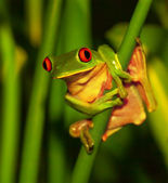 Cute green frog — Stock Photo