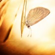 Grunge photo of butterfly — Stock Photo #22762952