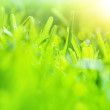 Abstract green grass background — Stock Photo #22763404