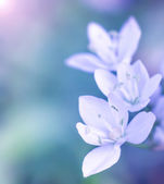 Gentle white flowers — Stock Photo