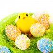 colorful eggs with little chick — Stock Photo