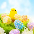 Chick with Easter eggs — Stock Photo