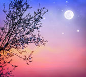Blooming tree over night sky — Stock Photo