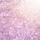 Blooming fruit tree — Stock Photo