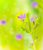 Purple wild flowers — Stock Photo