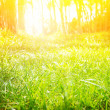 Sunny forest — Stock Photo #23898011