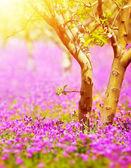 Sunny fruit tree garden — Stock Photo