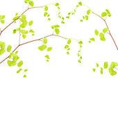 Fresh tree branch border — Stock Photo