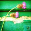 Pink cornflowers on wooden background - Stock Photo