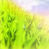 Abstract green grass border — Stock Photo