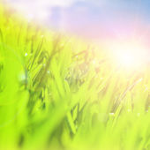 Fresh green field — Stock Photo