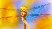 Beautiful dragonfly — Stock Photo