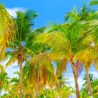 Tropical island background — Stock Photo