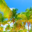 Stock Photo: Palm trees forest