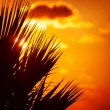 Palm silhouette over sunset — Stock Photo