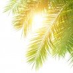 Green palm leaves border — Stock Photo