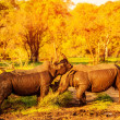 Stock Photo: Two fighting rhinoceros