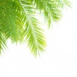 Palm tree leaves border — Stock Photo #28869383