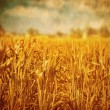 Wheat field landscape — Stock Photo