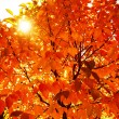 Natural autumn background — Foto de Stock