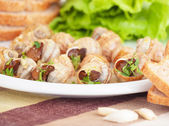 Tasty prepared escargot — Stock Photo