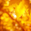Abstract autumnal background — Stock Photo #30984037