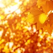 Autumnal leaves background — Stock Photo