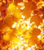 Dry autumnal leaves background — Stock Photo