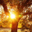 Sun ray through autumnal foliage — Stock Photo