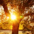 Sun ray through autumnal foliage — Stock fotografie