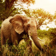Huge elephant outdoors — Stockfoto